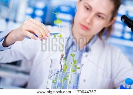 Woman science Assistant in laboratory with researsh GMO Plant