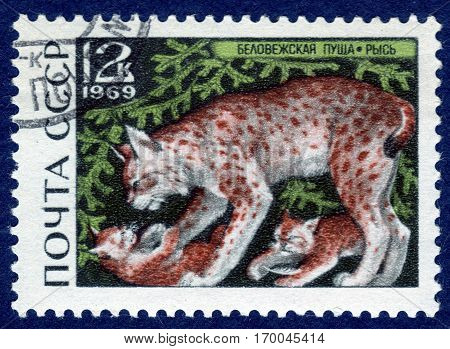 USSR - CIRCA 1969: Postage stamp printed in USSR with a picture of lynx (lat. Lynx lynx), of the series