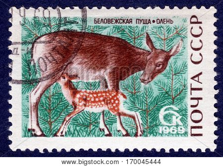USSR - CIRCA 1969: Postage stamp printed in USSR with a picture deer and small deer, from the series