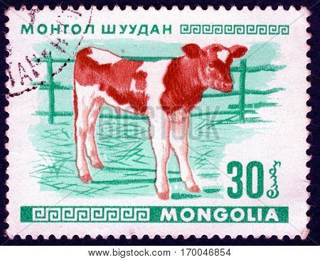 MONGOLIA - CIRCA 1968: Postage stamp printed in Mongolia shows image of a little calf, from the series