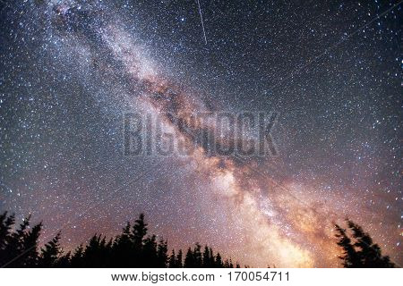 Starry sky through the trees. Carpathians. Ukraine Europe