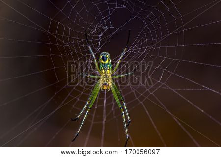 A spider at the cntr of afull web