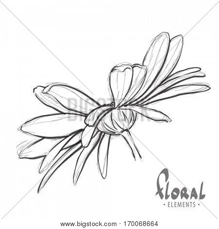 Beautiful sketch of daisies on a white background