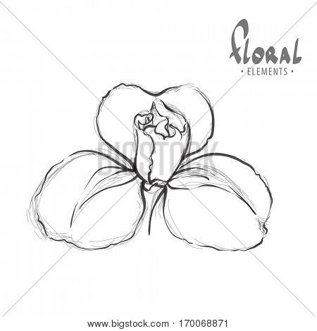 Exotic flower on a white background