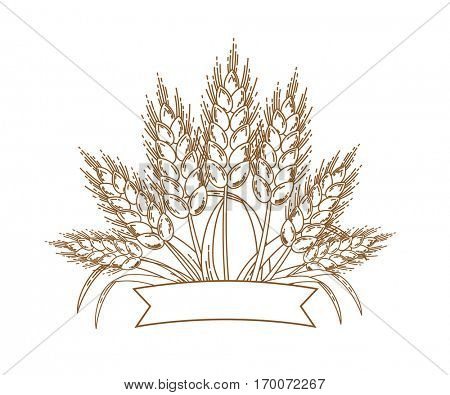Vector illustration of gold ripe wheat ears. Icon, Logo or design element isolated on white background