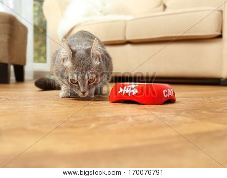 Cute cat eating food at home