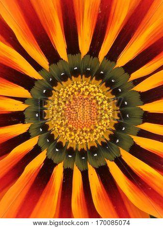 Flor anaranjada, con pequeños toques de amarillo.