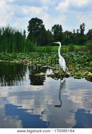 Reflejo de ave en río mirando a la izquierda