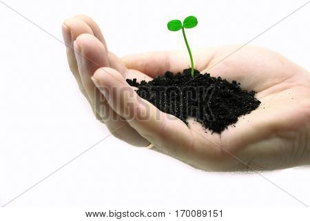 Little green sprout on a hand isolated on white background