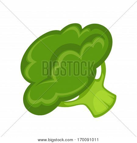 Green broccoli isolated on white background. Broccoli edible green plant in cabbage family whose large flowering head is eaten as vegetable. Realistic vector illustration of healthy nutrition product