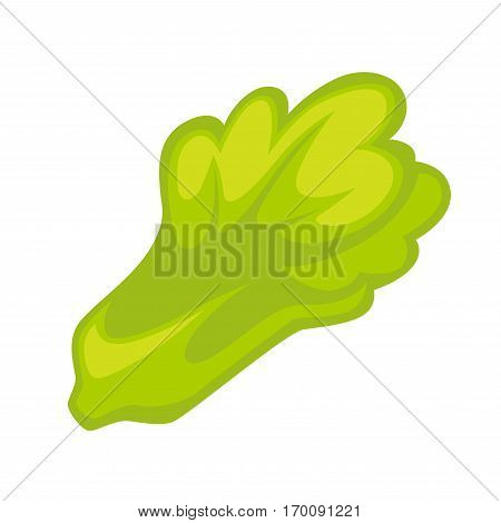 Leaf vegetables isolated on white background. Potherbs, vegetable greens, leafy or salad greens plant leaves eaten as a vegetable. Vegetarian food. Realistic vector illustration in flat style design