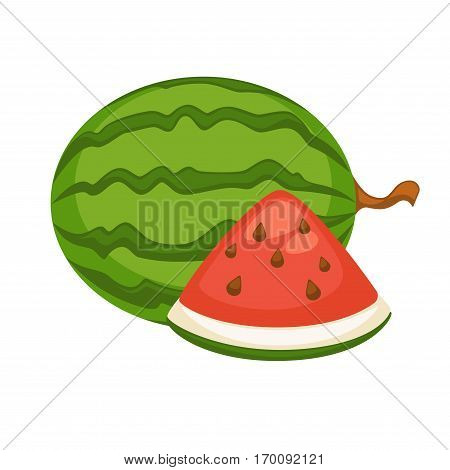 Watermelon fruit isolated on white. Berry with hard rind with green stripes and sweet, juicy flesh deep red to pink with many seeds. Botanically called pepo realistic vector illustration in flat style