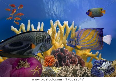 Coral Reef and Tropical Fish in Sunlight Red Sea.