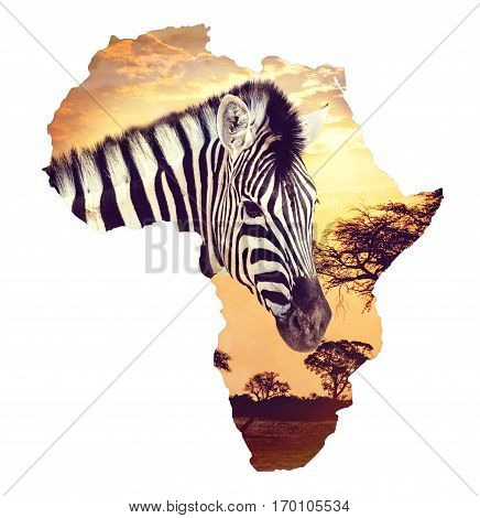 Zebra Portrait On African Sunset With Acacia Background. Map, Continent Of Africa. Wildlife And Wild