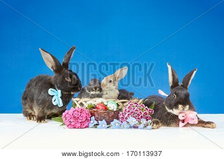 Two large and three small rabbits sitting beside Easter basket