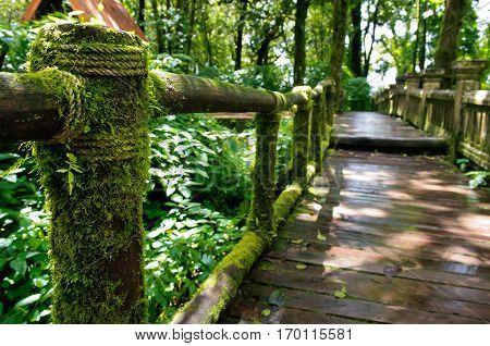 Walk way into rain forest, Inthanon mountain,Chiang Mai, Thailand