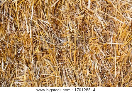 Picture of a dried hay on a summer day