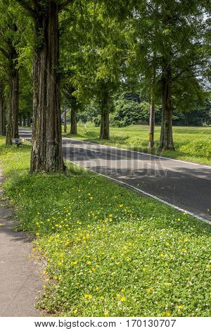 Lined trees with green roadside on yellow flowers