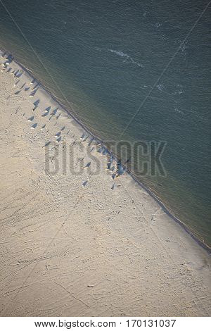 Aerial view of Robbeneiland beach with its colony of sea lions Ameland Frisian island The Netherlands