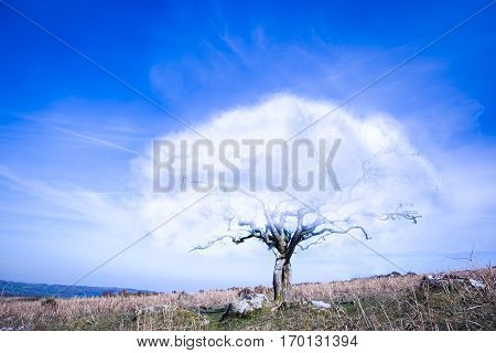 Surrealistic fantasy tree with a cloud instead of crown of leaves with blue sky and dry yellow grass