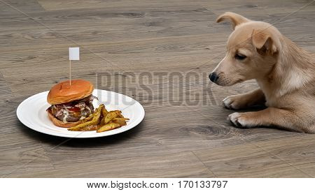 Puppy Dog Fastidious Looking At Tasty Hamburger