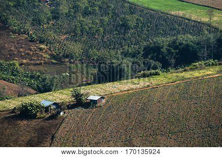 Terrace plantation on hill at Phu Lom Lo hill, Thailand