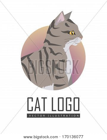 Toyger cat breed. Cute tabby cat seating flat vector illustration isolated on white background. Purebred pet. Domestic friend and companion animal. For pet shop ad, animalistic hobby concept, breeding