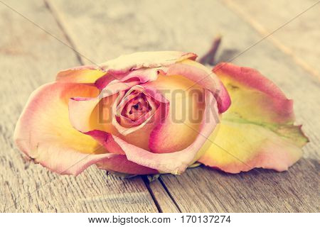 Close-up of wilted rose lying on the wooden background