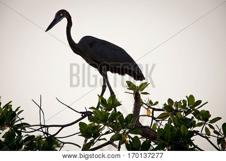 shadow of an egret perched on a tree