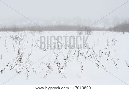 Close up photograph of snow covered plants details on the field.