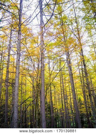 The fall season of kamikochi in Hotaka Ranges Kamikochi Japan.