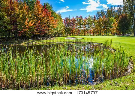 Shining day in French Canada. Adorable pure pond overgrown with reeds. Autumn foliage reflected in clear water of the pond. Concept of recreational tourism