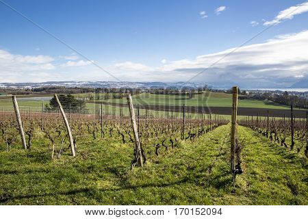Swiss autumn landscape with vineyards green field and Leman lake and mountain in the background