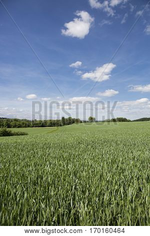 nature landscape: farming fields in Switzerlang during springtime with young crops
