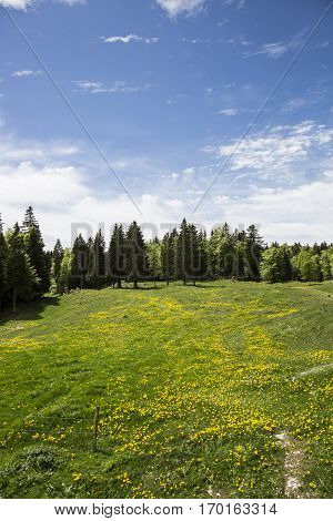 Mountain landscape blooming  green meadow, Jura, Switzerland