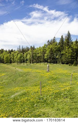 Bucolic mountain landscape with blooming green meadow Jura Switzerland
