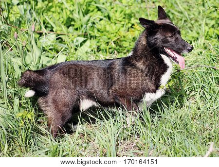 Cheerful mongrel dog among the green grass.