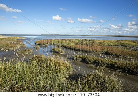 Maritime Dutch landscape with heathland blue sky and cloud Waddenzee Friesland The Netherlands