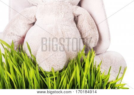 A toy bunny sitting in the grass.