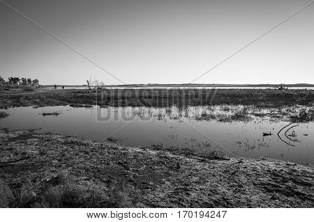 black and white image of lagoon at nature reserve Casse de la Belle Henriette recovered after sea went over the dike after the storm Xynthia in February 2010