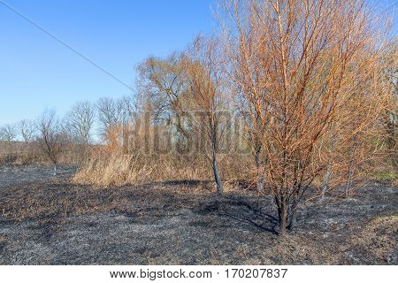 natural disaster with trees and plants burned