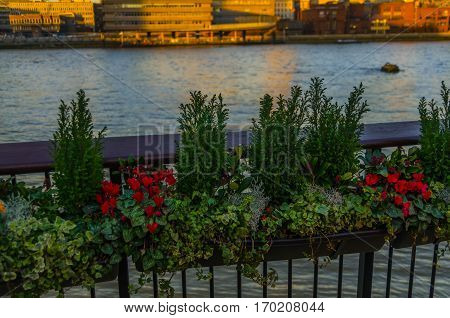 flowers in pots attached to a metal railing on the banks of the river in the light of the setting sun