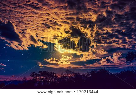 Attractive Of Amazing Gold Dark Night Sky With Stars And Cloudy Above Field Of Trees.