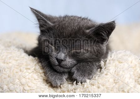 cute sleeping kitten