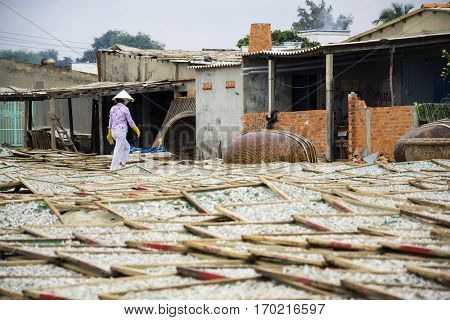 Anchovies Drying For Fish Sauce Production In Mui Ne, Vietnam