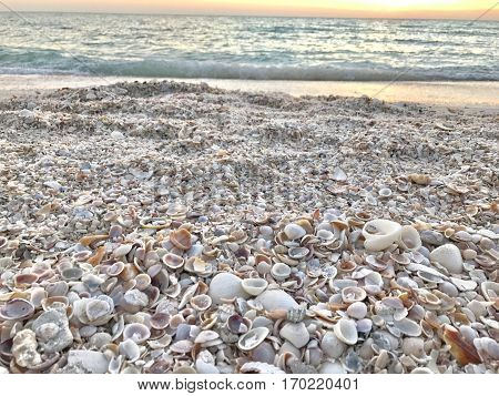 So many seashells on the seashore. Photo taken in Lido Beach, Florida.