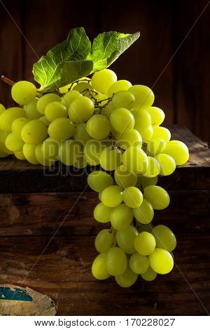 close up view of fresh grape  on color back