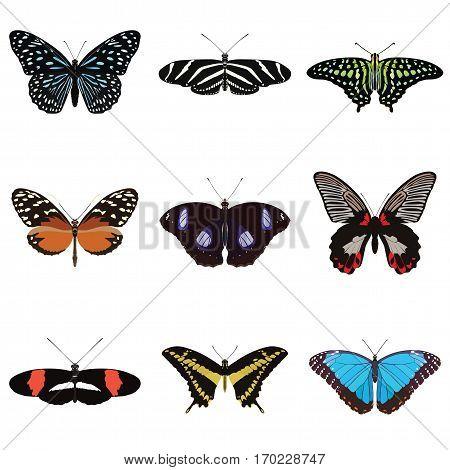 Set of nine colorful, exotic, vector butterflies.
