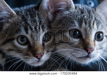 two little kitties look curiously at the world