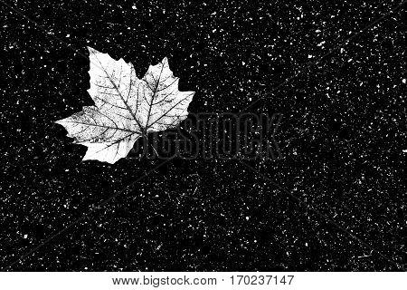 Weathered Maple Leave On An Asphalt Road  - 4